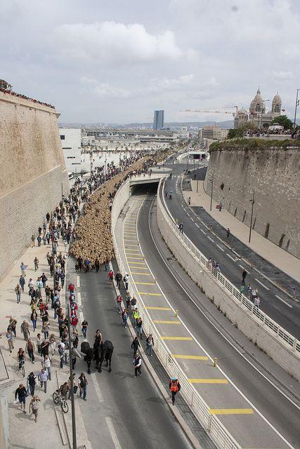 Arrivée de TransHumance à Marseille pour MP2013 - 09/06/13 ©Sam Mertens