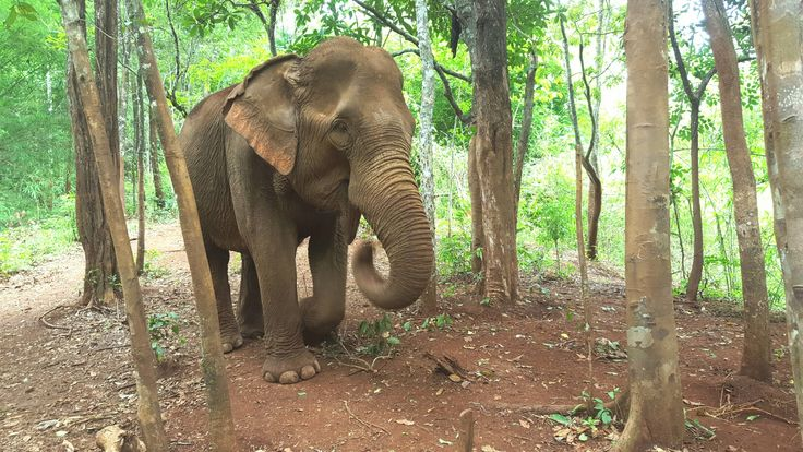 Mondulkiri project, elephant sanctuary - Sen Monorom