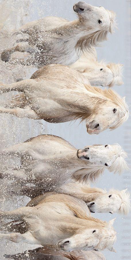 Running Wild Horses More