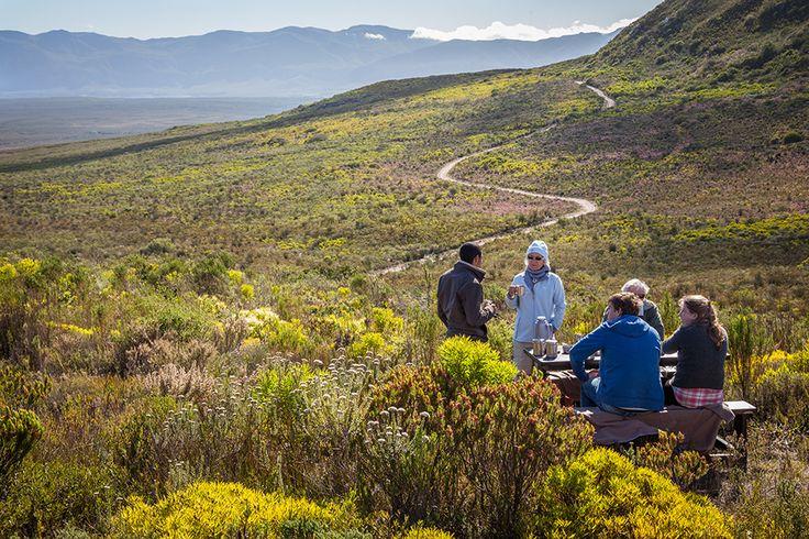Now Might Just be the Perfect Time to Take a Romantic Getaway | Grootbos #fynbos #FlowerSafari #picnic http://www.grootbos.com/en/blog/honeymoon/now-might-just-be-the-perfect-time-to-take-a-romantic-getaway