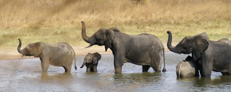 elephant herd at river - Google Search