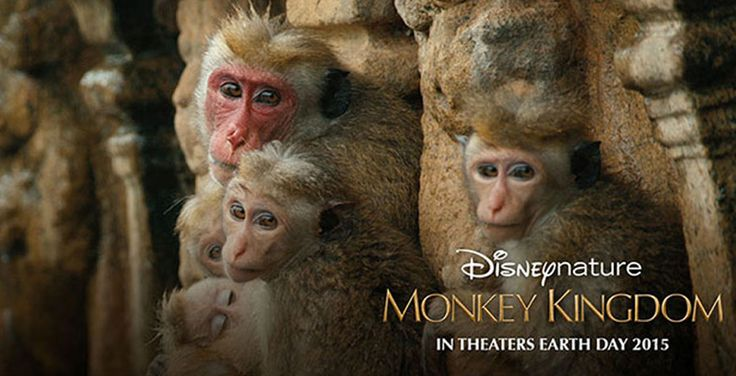 """Movie Review: """"Monkey Kingdom"""" Is Better Suited For A Younger Audience"""