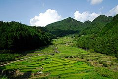 20080813 Yotsuya 6 (BONGURI) Tags: nikon country yotsuya d200 ricefield ricepaddy riceterrace senmaida shinshiro yotsuyasenmaida