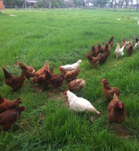 Milawa Free Range Poultry