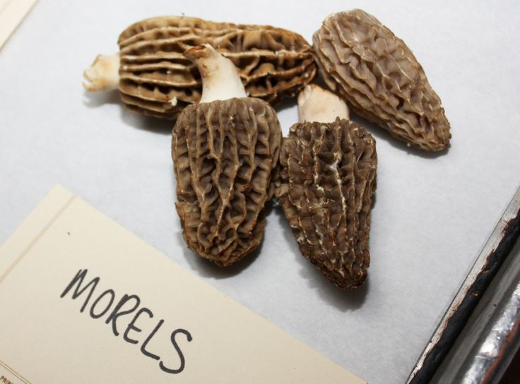 Know Your Mushroom Varieties And How To Cook With Them Best | Food Republic