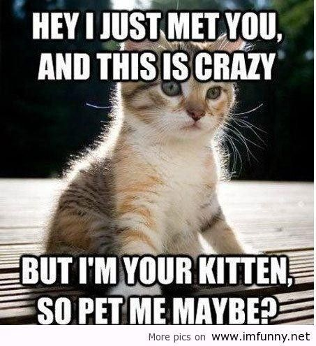 Kittens with Sayings   Cute picture captions quotes little funny kitten call me - Words On ...