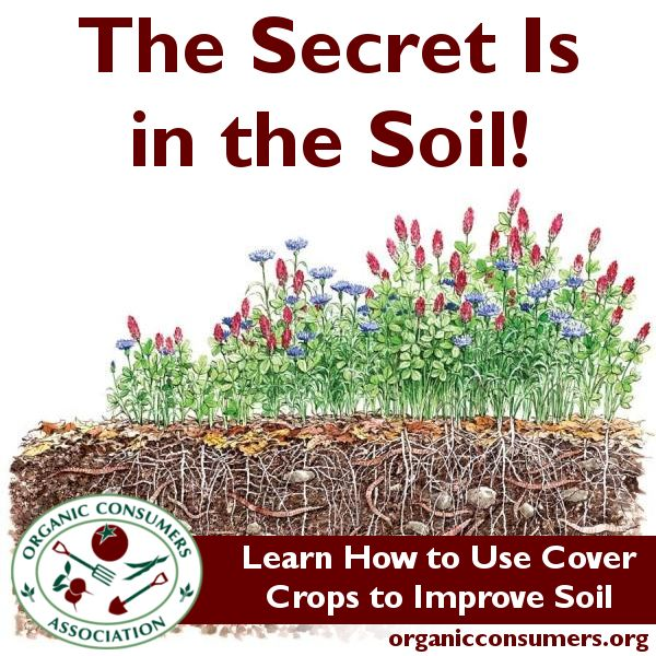 32 best images about teach soil health on pinterest for Uses of soil