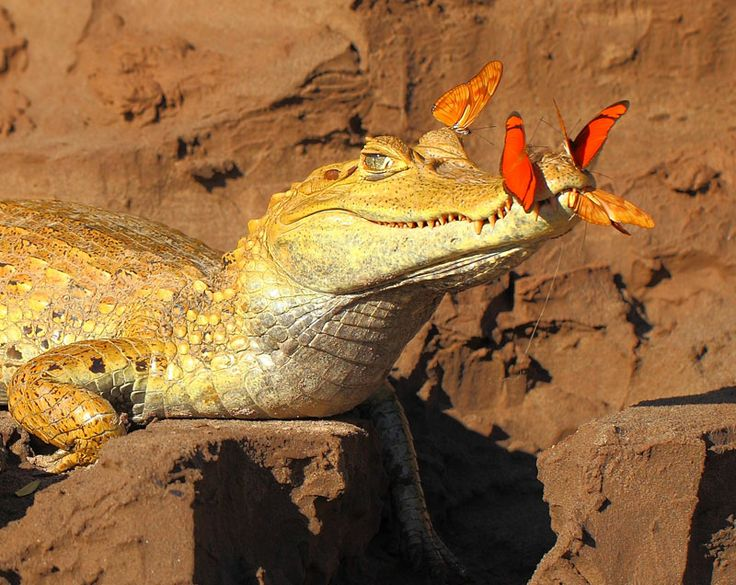 Butterfly Feast, Tambopata National Reserve, Peru - R. Grant Maslowski, Newcastle, New South Wales, Australia