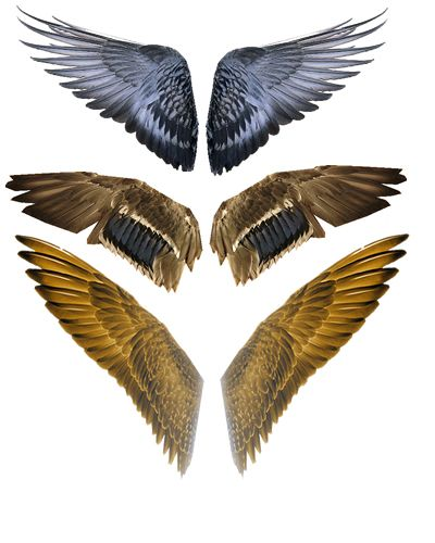 Bird Wings for Bird of Prey (Cecelia Clark Series, Book 2)???