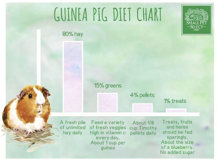 Pin On Guinea Pig Feeding Diet