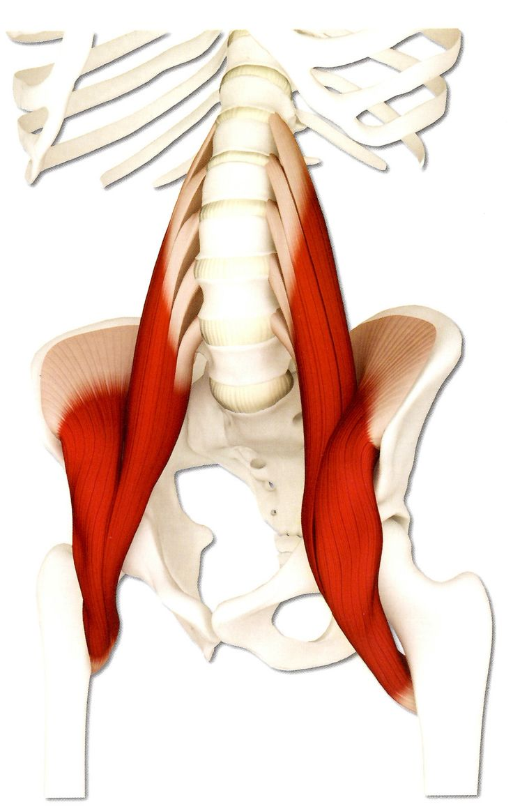40 best Psoas images on Pinterest   Yoga anatomy, Muscles and ...