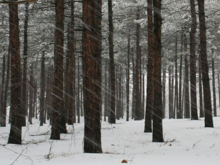 The Morton Arboretum in the snow.