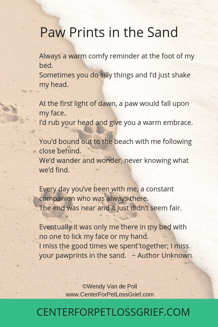 Pet Loss Poems To Heal Your Heart and Soul Pet loss