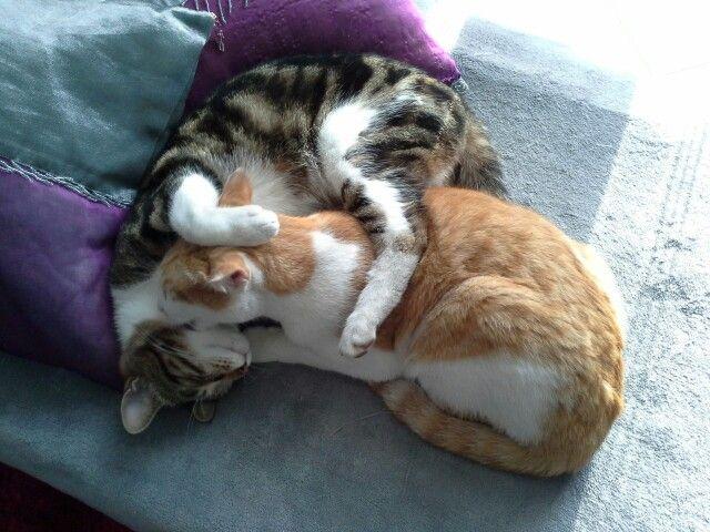 Zucchero e Miele in un tenero abbraccio...