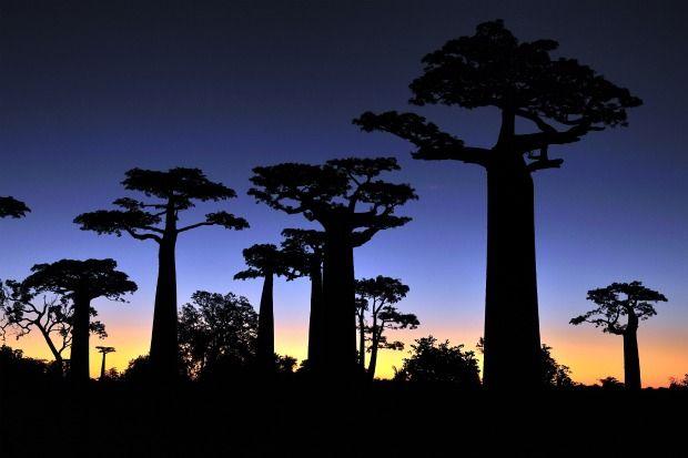 10 Rapidly Vanishing Environmental WondersIndian Ocean, Development Flora, Environmental Wonder, Vanishing Environmental, Rapid Vanishing, Rampant Logs, Madagascar Photos, Earth Day, 10 Rapid