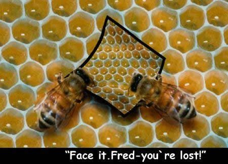 Funny Picture Image - Lost Bee Map