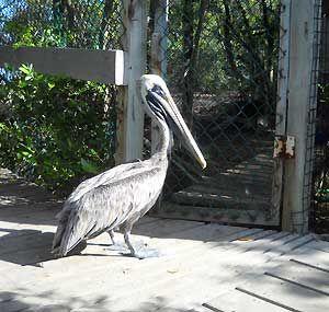 Florida Keys Wild Bird Center: MM 93.6 Tavernier, FL free, run by volunteers, stop only takes ~ 30 min