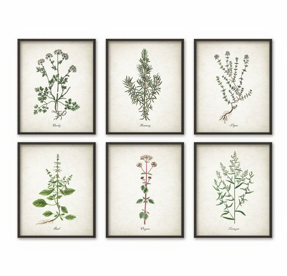 Kitchen Art Vegetables Print Botanicals Kitchen Art: Kitchen Herbs Wall Art Print Set Of 6