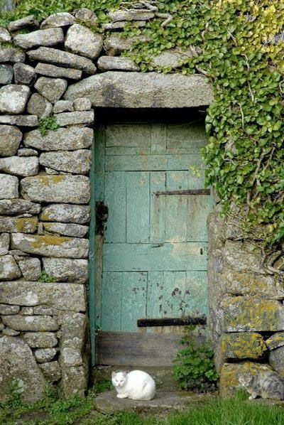 Cornwall, beautifully faded old cottage door and a white cat.