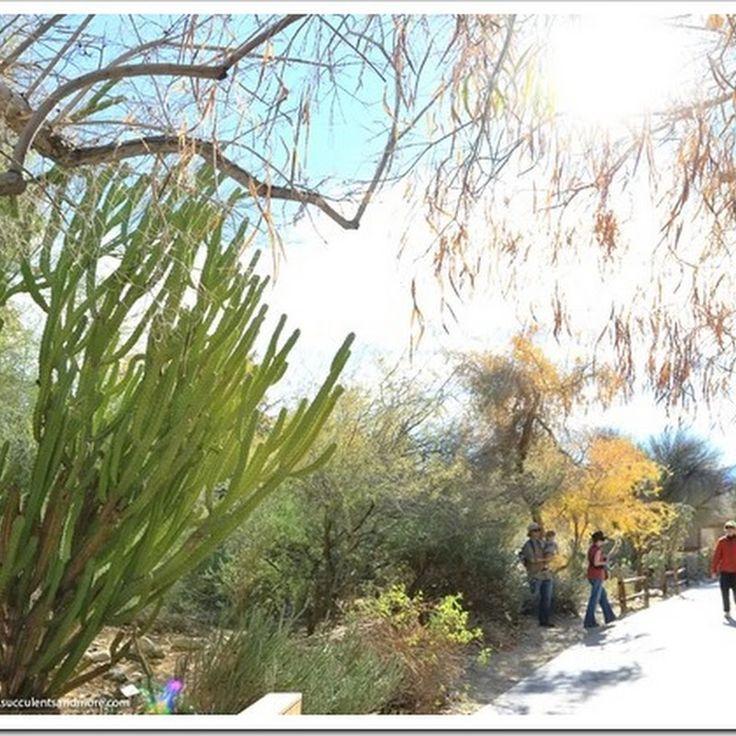 Descubriendo hojas: Jardín botánico en el Parque de las Leyendas (Lima, Perú)