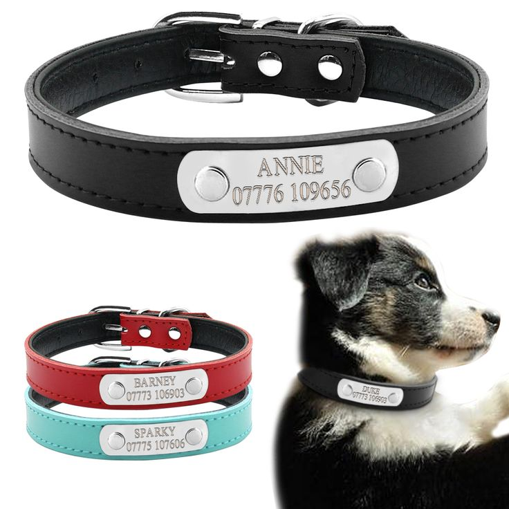 We just LOVE this Soft Leather Personalised Dog Collars Every purchase helps local pet charities Get free shipping while stocks last! https://www.pawsify.com/product/soft-leather-personalised-dog-collars/