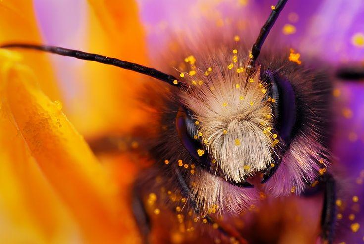 1X - Miner Bee by Boris Godfroid