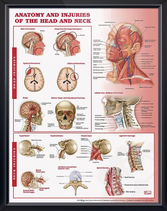 Best 25+ Cranial nerve 7 ideas on Pinterest | Cranial ...