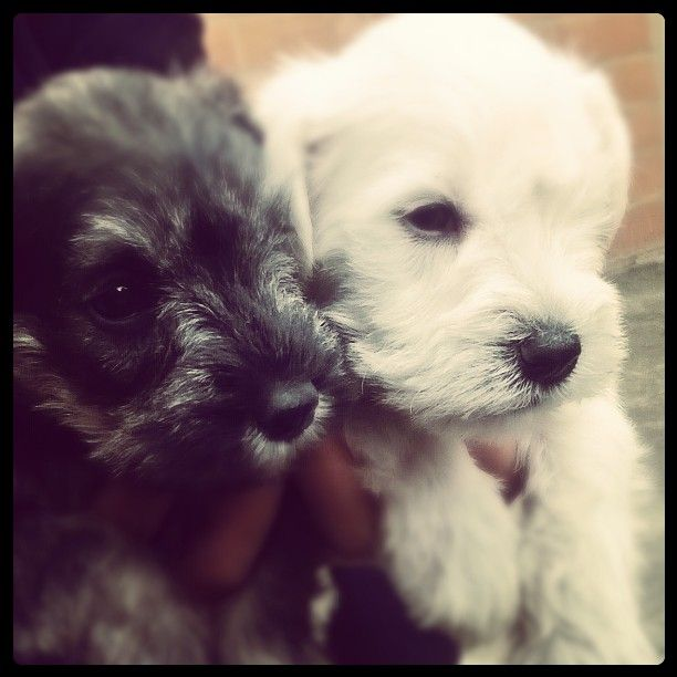#little #pets #beautiful