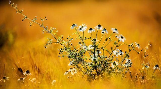 envoyer un bouquet de fleur 86 #fleurs #bouquet