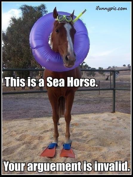 lol: Sea Horses, Laughing, Seahorses, Giggl, Funny Stuff, Humor, Funny Animal, Smile, Funnystuff
