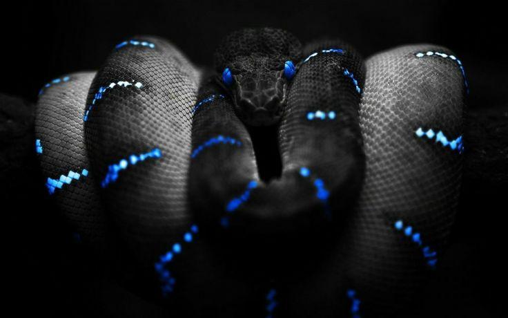 Snake/Yılan