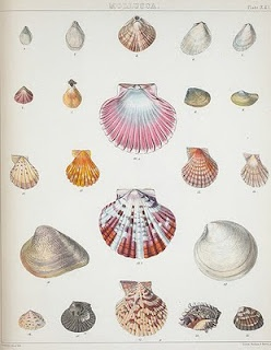 Papeterie Mer & Plage - Divers coquillages à imprimer