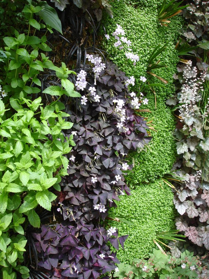 86 best Exterieur images on Pinterest Gardening, Landscaping and - Produit Nettoyage Mur Exterieur