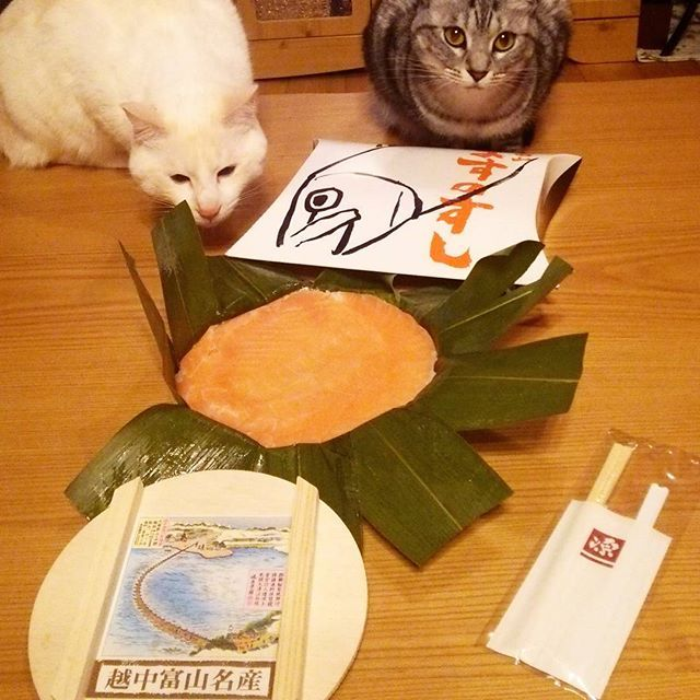 #富山#ますの寿司♡  見かけたら必ず買っちゃう♡  やっぱりここのが一番#美味しい♡  #ます寿司  #にゃんこ兄弟 #猫 #ねこ #愛猫 #白猫 #サバトラ #ニャンコ #にゃんこ #ねこ部 #仲良し #いつも一緒 #cat #lovecats #catlove #catstagram #kitty #whitecat #kawaii #ねこすたぐらむ #にゃんすたぐらむ #猫ばか #元野良猫 #溺愛 #猫中心 #猫好き #みんねこ