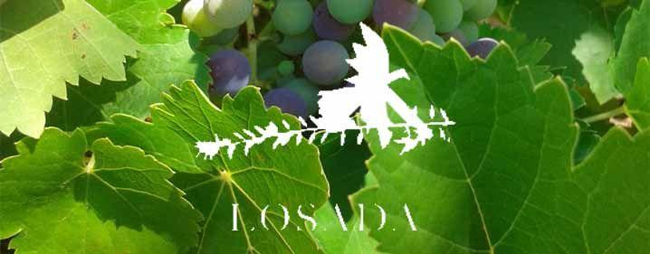 Desde el comienzo, nuestra viticultura sigue un camino distinto al habitual en El Bierzo. En lugar de buscar viñas en pendientes de pizarra, nos centramos en recuperar viejos viñedos de mencía,