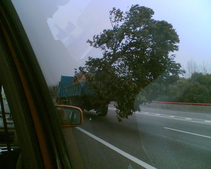 A tree that is bigger than the truck !! taken from my taxi on the way to Shanghai Airport 2012
