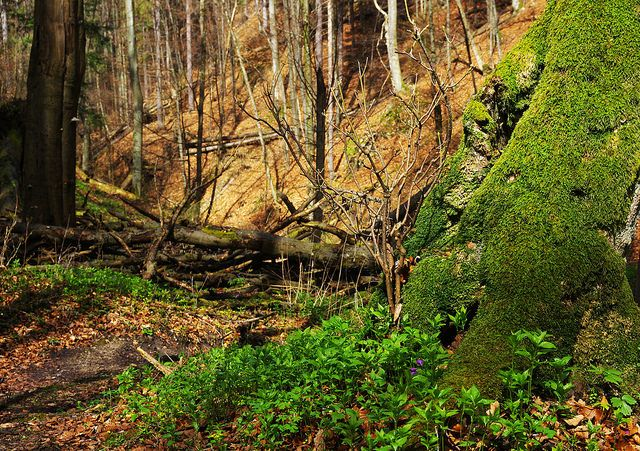 Hiking in Piecky gorge by Gregor  Samsa, via Flickr