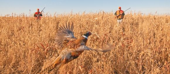 S.D. pheasant hunting
