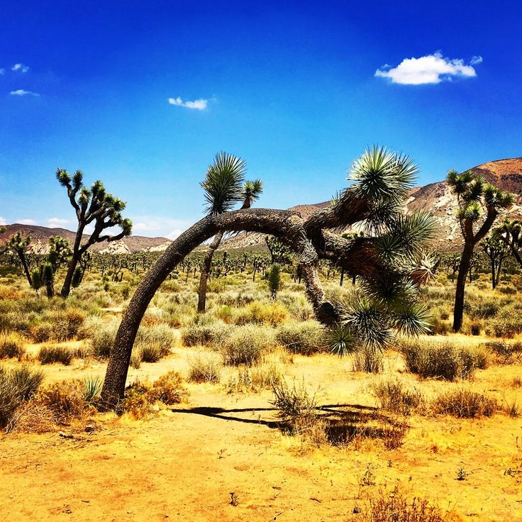 Great things to do with kids in Southern California. Joshua Tree National Park, USS Midway, La Jolla Cove, Venice beach, Getty Centre and more.