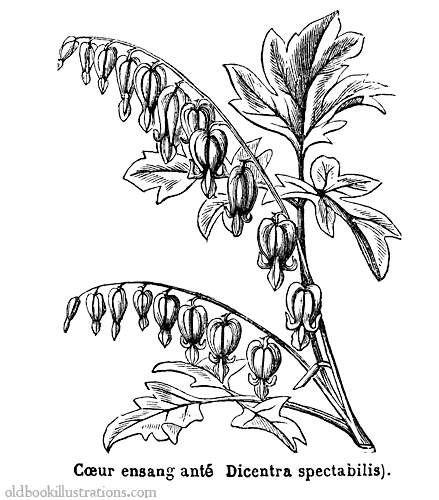 486 best mini: books images on Pinterest   Botanical ...