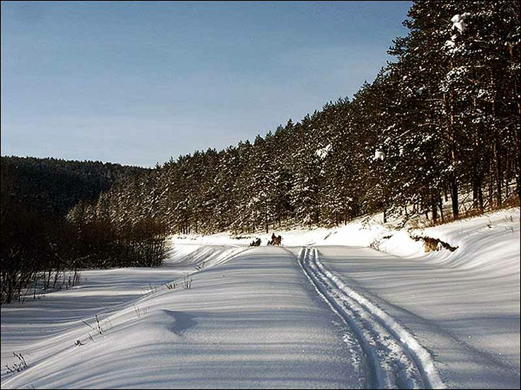 Typical Winter Forest in Russia