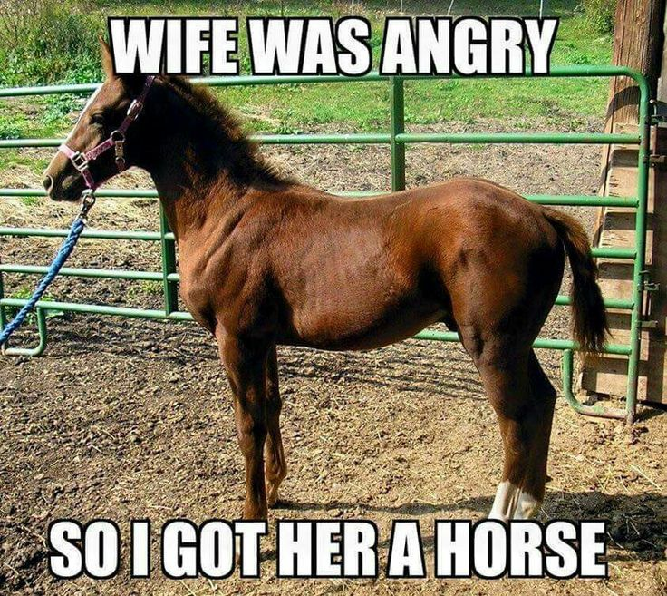 42 best MOST FUNNIEST HORSE QUOTES images on Pinterest ...
