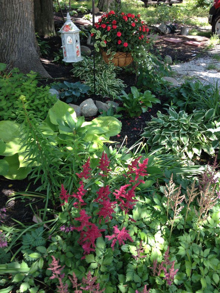 Shade garden: hosta, astilbe, ferns, impatients (pot)