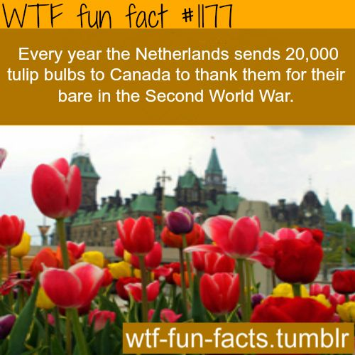 canada MORE OF WTF-FUN-FACTS are coming HERE  funny and weird facts ONLY