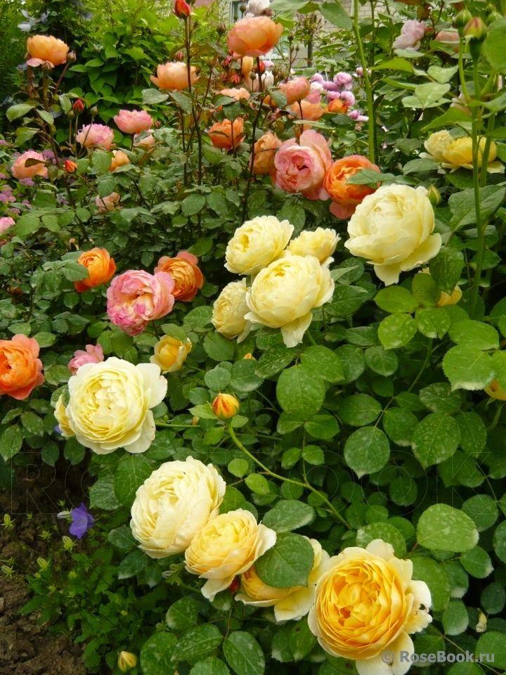 17 Best Images About Enjoy Flower Gardening On Pinterest
