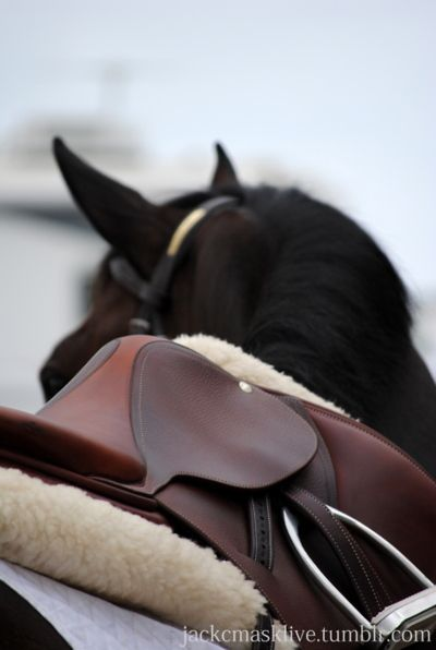 silver charm  Jocelyn Gowans on Horses
