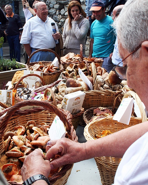 Mushrooms in Setcases, Catalan Pyrenees |  Setas en Setcases, Pirineo catalán  Bolets a Setcases | Pirineus catalans.  © Ajuntament de Setcases  http://www.demediterraning.com/es/hoteles-esqui_t_23/pirineo-catalan_zt_53.html