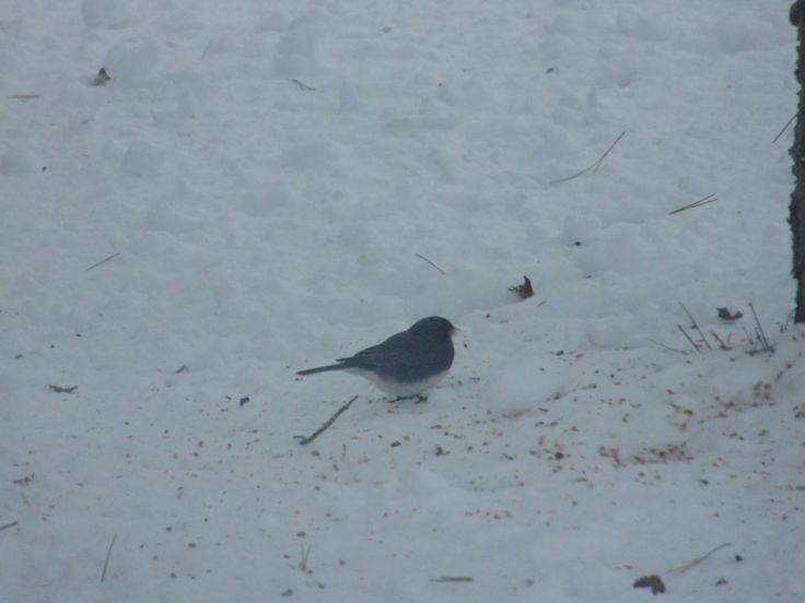Bird on Snow