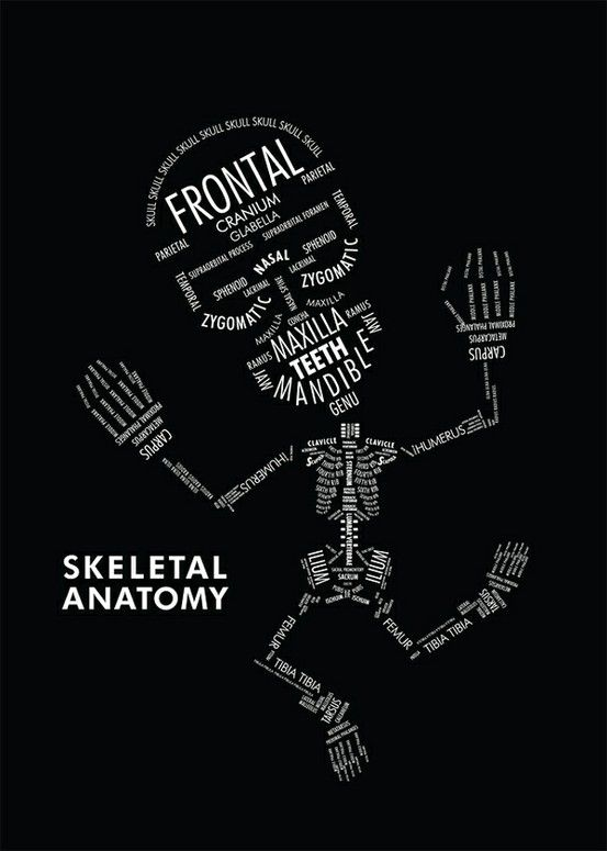 how to learn anatomy quickly