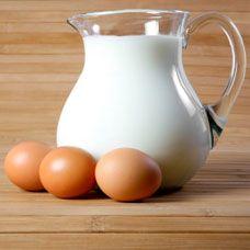 eggcelent-shake-egg-milk-protein-shake
